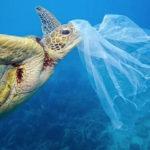 Mapa-basura-marina- reciclada