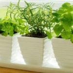Plantas_interiores_portada