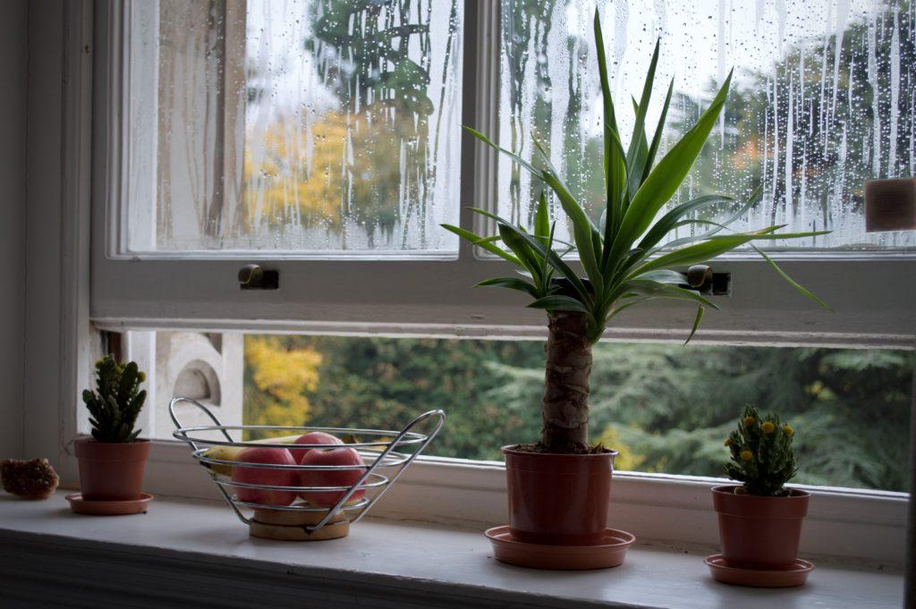 distribuir plantas para proteger las persianas
