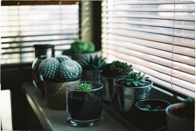 proteger las persianas cerca de plantas por humedad
